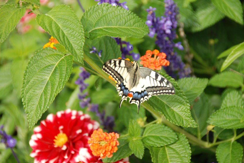 Butterly in a garden